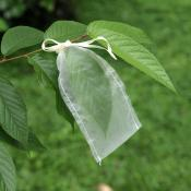 Insect Rearing Bag (L15 x W6 cm)