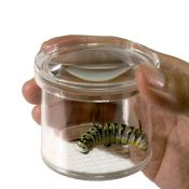 Magnifying Insect Viewer